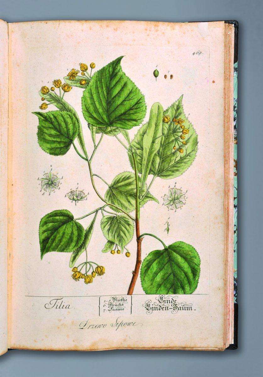 Blackwell Elisabeth, Herbarium…