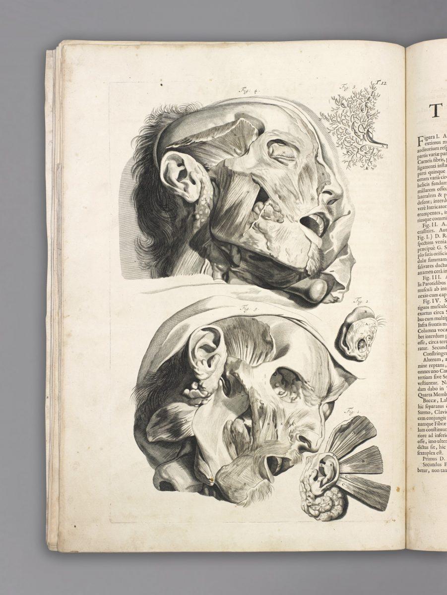 Bidloo Godefridus, Anatomia…